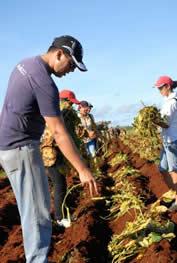 20081018215539-agricolas3.jpg