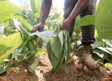 20081223212221-agricolas.jpg