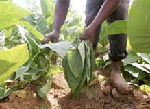20100923154651-agricolas.jpg