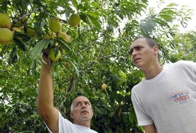 20120515164300-frutas-melocoton.jpg