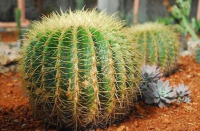 20120709213235-jardinb.jpg