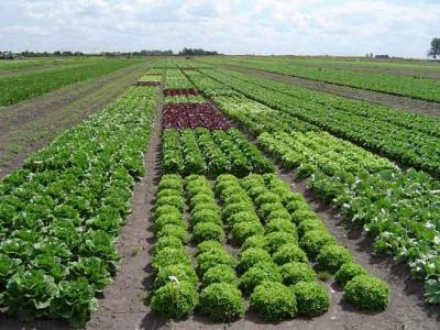 20121107153101-agricultura-organica1.jpg
