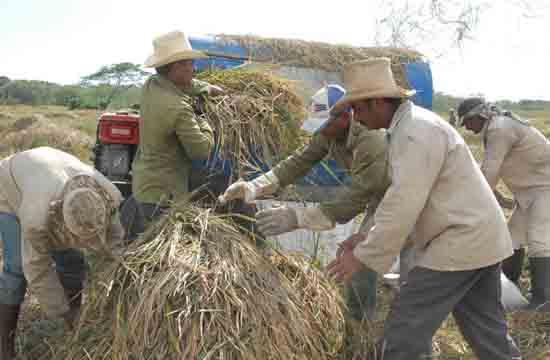 20121120100014-arroz-amancio.jpg