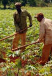 20120219142959-agricultura34.jpg