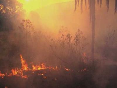 20130115113938-incndio-forestal.jpg