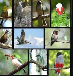 20130203094757-aves-de-cuba.jpg