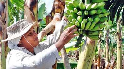 20130411150629-400-mujer-agricola-13.jpg