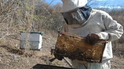 20131203125620-400-miel-exportacion.jpg